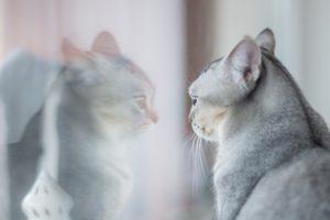 kat kijkt in de spiegel