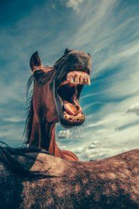 'lachend' paard
